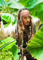 Captain Jack Sparrow - captain-jack-sparrow photo