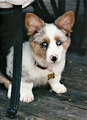 Cute Dog  - dogs photo