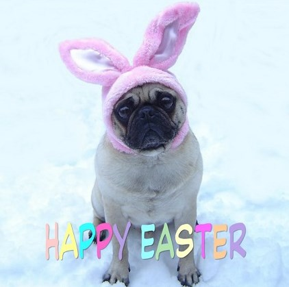 Cute Pug Bunny Happy Easter