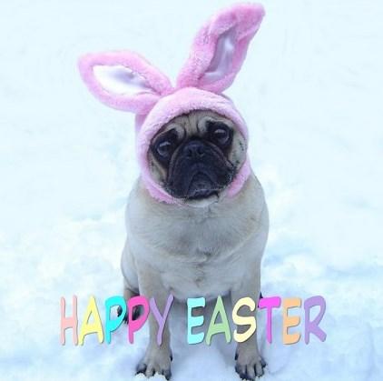 Cute Pug Bunny Happy Easter