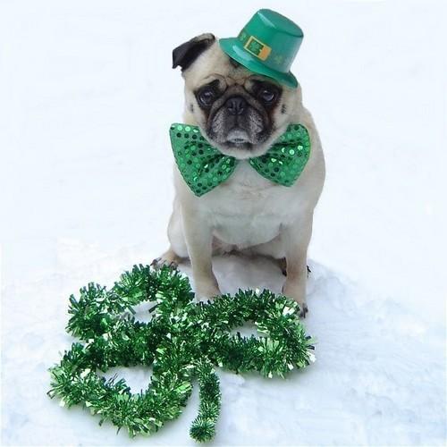 Cute Pug Dog St. Patrick siku