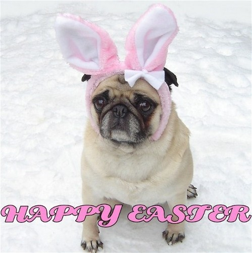 Cute Pug Easter Bunny Happy Easter