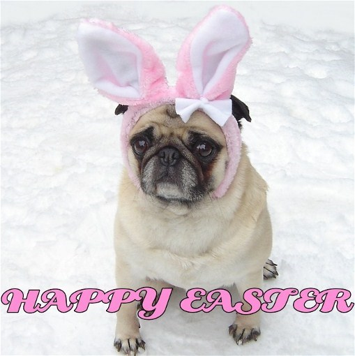 Cute Pug Easter Bunny Happy Easter - Puppies Photo ...