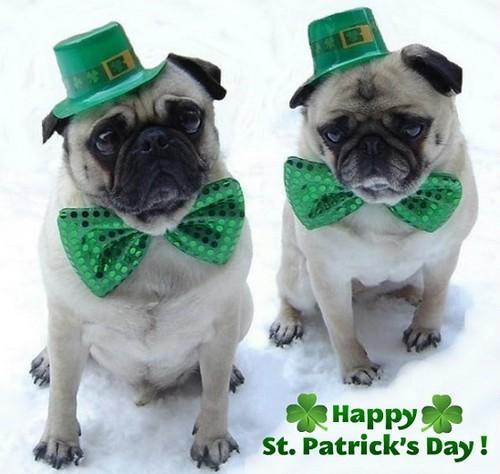 Cute Pugs St. Patrick's hari
