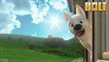 Disney Bolt Dog Desktop Wallaper HD - disneys-bolt wallpaper