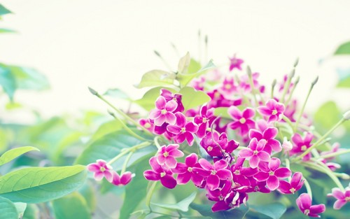 Flowers wallpaper with a mountain laurel, common lilac, and an oleander titled Flowers