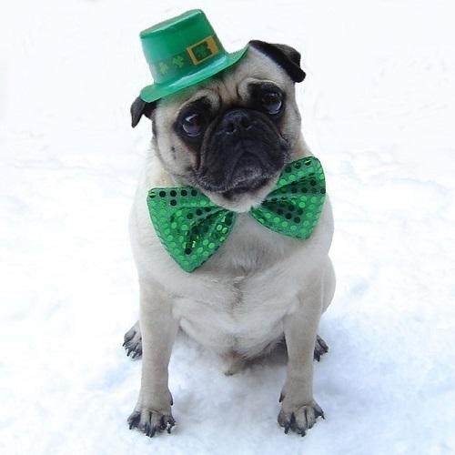 Funny Debonair Pug St. Patrick