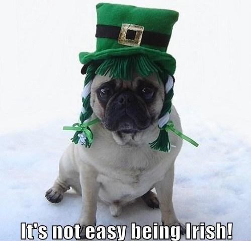 Funny Irish Pug St. Patrick's दिन