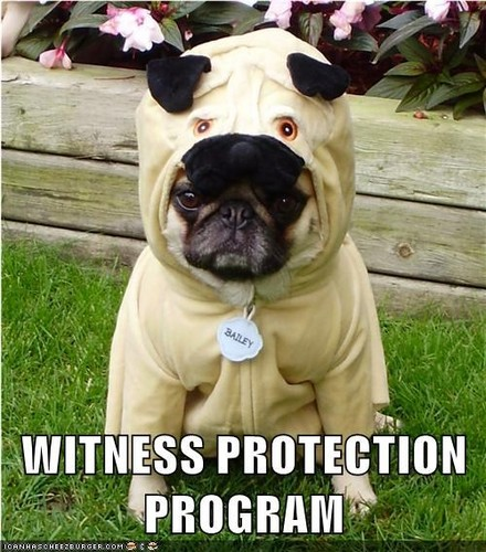 Funny Pug Costume Meme