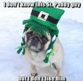 Funny Pug Dog St. Patrick Day - animal-humor photo