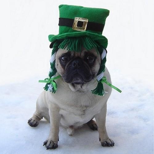 Funny Pug St. Patrick's Day