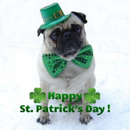 Funny Pug St. Patrick's dia