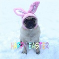 Funny Sad Pug Dog Easter Bunny