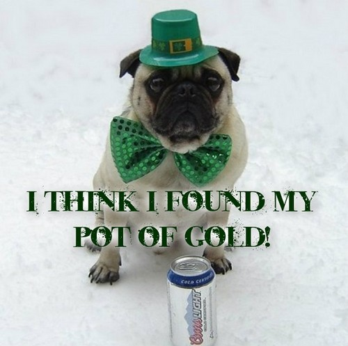 Funny St. Patrick's 日 Pug Dog Meme