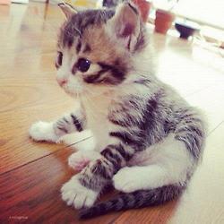 anak kucing ♥