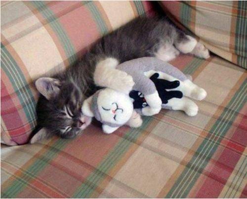 Kitty has a teddy... kitty?