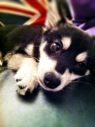 Loki the dog of Liam and Danielle - one-direction Photo