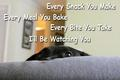Lol! - dogs photo