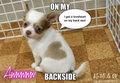 Lovert on my backside - cute-puppies fan art