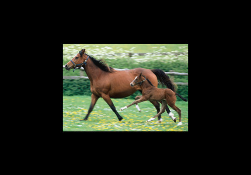 Mother and mtoto, foal