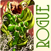 Rogue - green icon