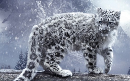 Animals wallpaper entitled Snow Leopard