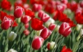 beautful picture - beautiful-pictures photo