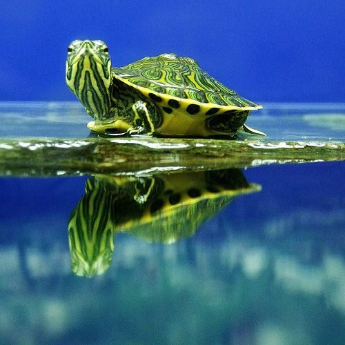 beautiful tortue