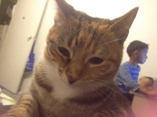 my cute little kitty,MINNIE!!!