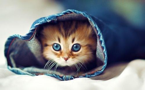 Cute Kitten (N'awww) 100% Real ♥