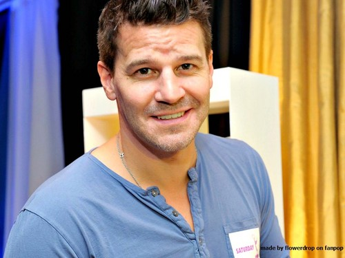 David Boreanaz wallpaper with a portrait entitled David Boreanaz Wallpaper