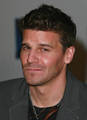 David - david-boreanaz photo