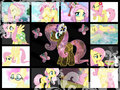 My Fluttershy Collage - fluttershy fan art