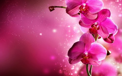 fiori wallpaper containing a begonia, a camellia, and a rose titled Orchid