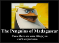 Play it again! - penguins-of-madagascar photo