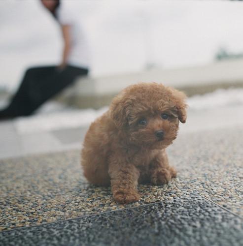 cachorro, filhote de cachorro