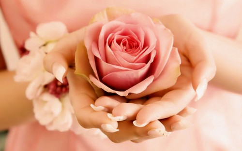 fiori wallpaper containing a bouquet, a rose, and a rose entitled Rose
