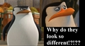 Skipper Who-what - penguins-of-madagascar photo