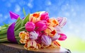 Tulips  - flowers wallpaper