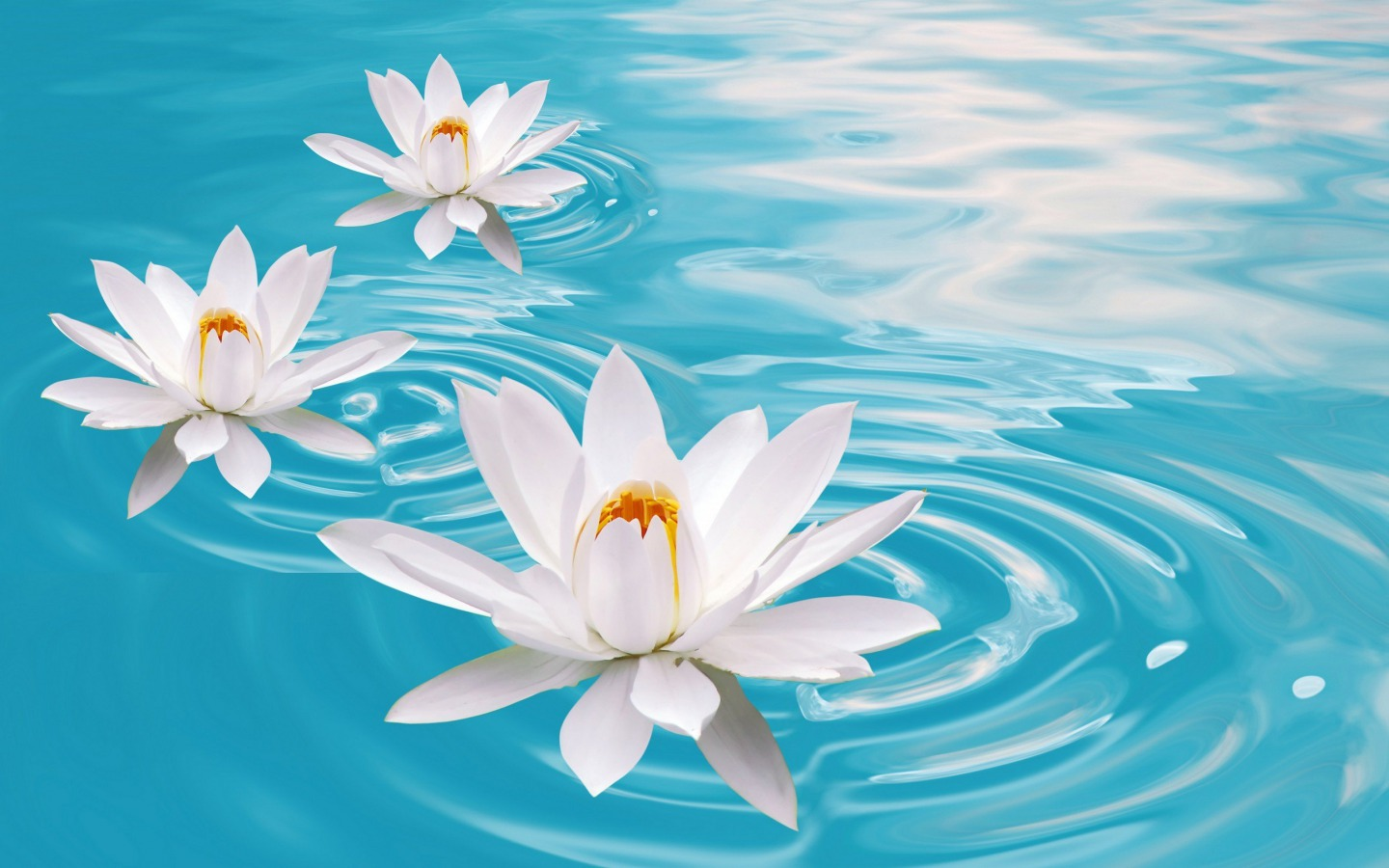 Flowers images Water Lilies HD wallpaper and background photos