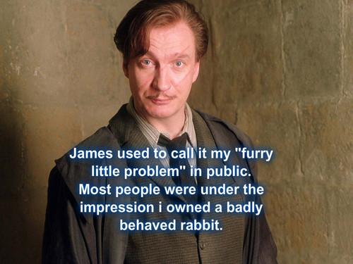 Remus Lupin Hintergrund titled Werewolfs rabbit