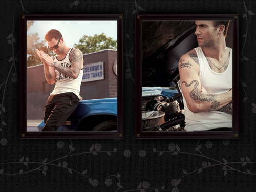 Adam Levine wallpaper called adam levine