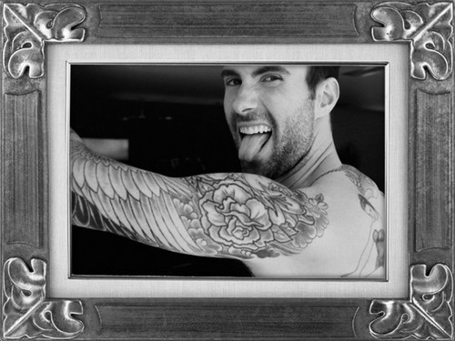 Adam Levine wallpaper titled adam levine