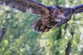 flying critter - joomla photo
