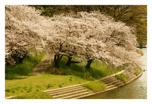 spring wallpaper*3