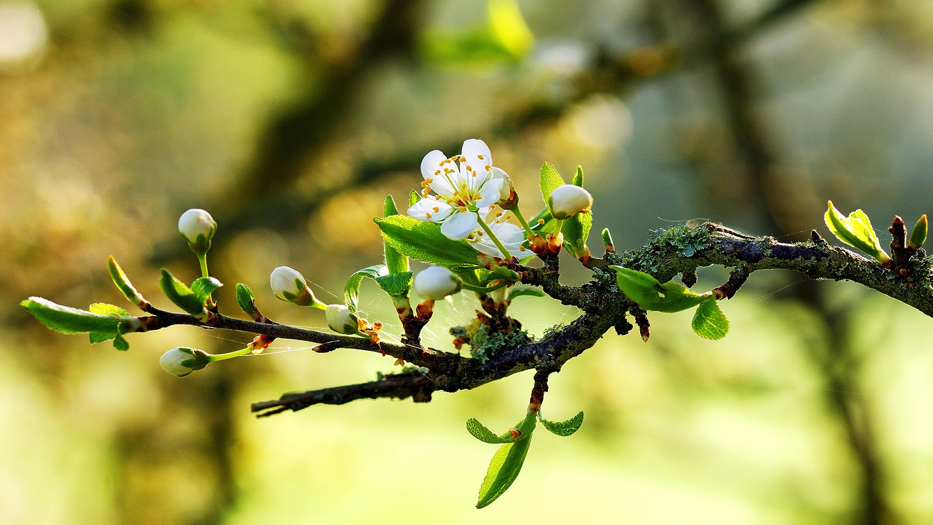 spring wallpaper*1 - Spring Wallpaper (34023134) - Fanpop