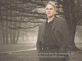 your past is always with you - ncis wallpaper