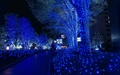 Blue Xmas in Tokyo - japan photo