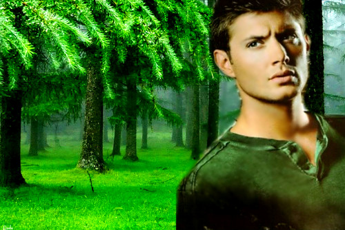 Supernatural wallpaper probably containing a beech and a portrait titled Dean Winchester