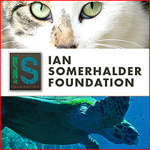 Ian Somerhalder Hintergrund probably containing a tabby and a tabby titled Ian Somerhalder Foundation